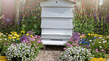 How to start a backyard bee hive