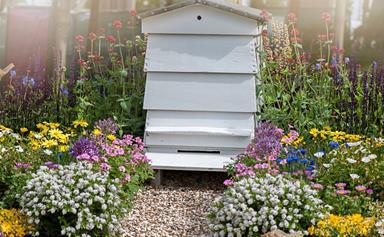 How to start a backyard bee hive