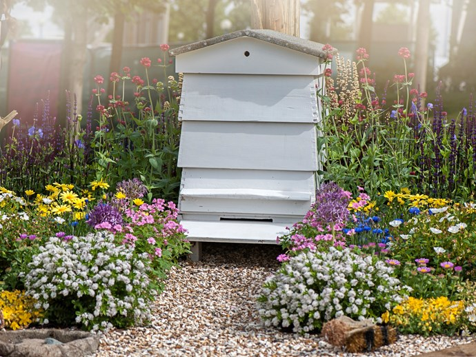 Bee hive surrounded by flowers