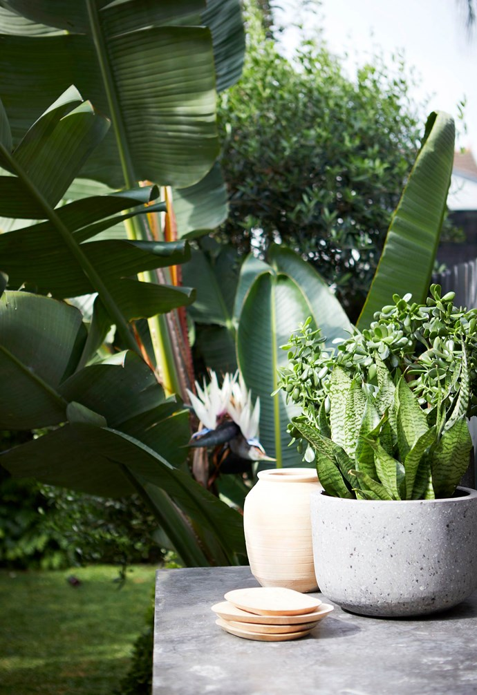 **Deck** Terracotta and concrete planters add interest and muted colour against the expanse of greenery. An easy-care jade plant and dwarf snake plant provide sculptural texture.
