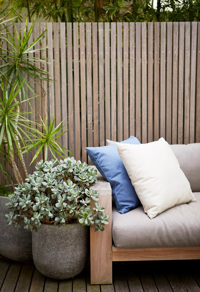 **Deck** Weathered timber screening around the entertaining zone allows light to filter through, ensuring the space feels open and airy. Silvery Crassula ovata 'Blue Bird' and a spiky leaf dragon tree help to soften the hard lines of the fencing.