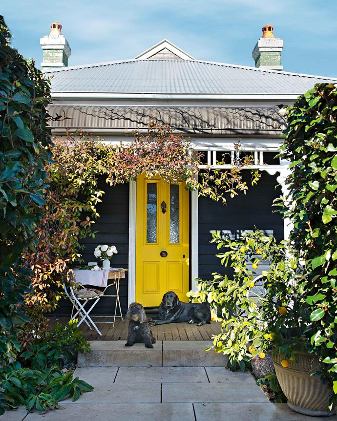 The bright yellow front door is painted with Dulux Midas Touch, while the exterior is painted in Taubmans Black Fox. Lulu the spoodle and labrador Monty stand guard.
