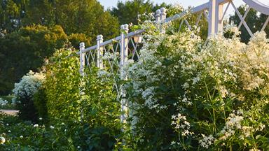 15 plants with show-stopping white flowers