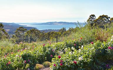 Wander through Woodbridge, a fruit and flower farm in Tasmania