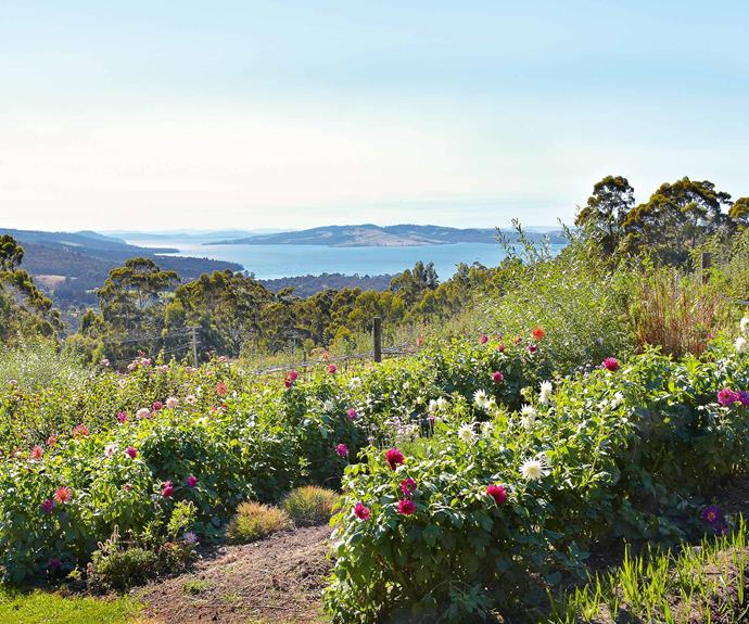 "The nursery overlooks Tasmania's D'Entrecasteaux Channel and nearby Bruny Island. Bob and Anna bought 15 hectares on the hill at Woodbridge (36 kilometres south of Hobart), built their [rustic farmhouse](https://www.homestolove.com.au/a-rustic-farmhouse-where-greenery-abounds-4325|target=""_blank"") themselves and established two hectares of garden for cut flowers and an orchard."