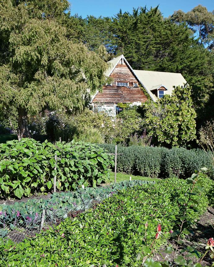 Three decades since they first set up shop, the Magnus's house is cocooned in the ever-growing garden.