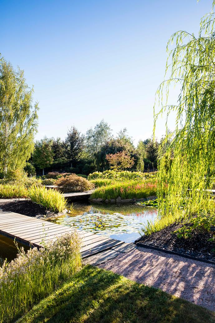 A boardwalk winds through the Water Garden, an aquatic wonderland of water lilies, water irises, canna lilies, Moss White birch trees and weeping willows.