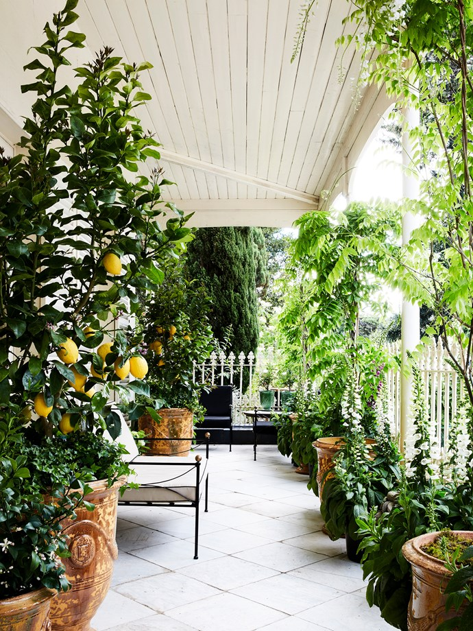 Julian Ronchi was charged with creating a potted small space garden on a sunny portion of the verandah.