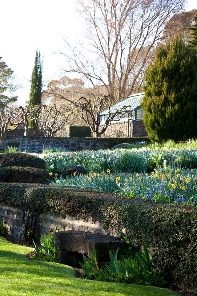 """In the [gardens of this historical estate](https://www.homestolove.com.au/daffodil-garden-rydal-13765