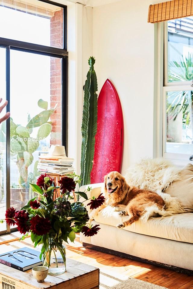 "[Hugo the Golden Retriever](https://www.homestolove.com.au/real-pets-golden-retriever-19241|target=""_blank"") has secured his sunny spot on the sofa."