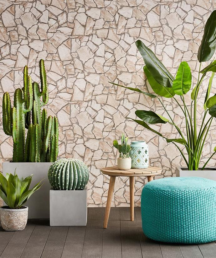 "[Desert cactus](https://www.domayne.com.au/promos/summer-alfresco?utm_source=Banner&utm_medium=Bauer&utm_campaign=summer_alfresco|target=""_blank""