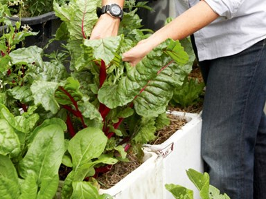 How to grow vegetables in a foam box