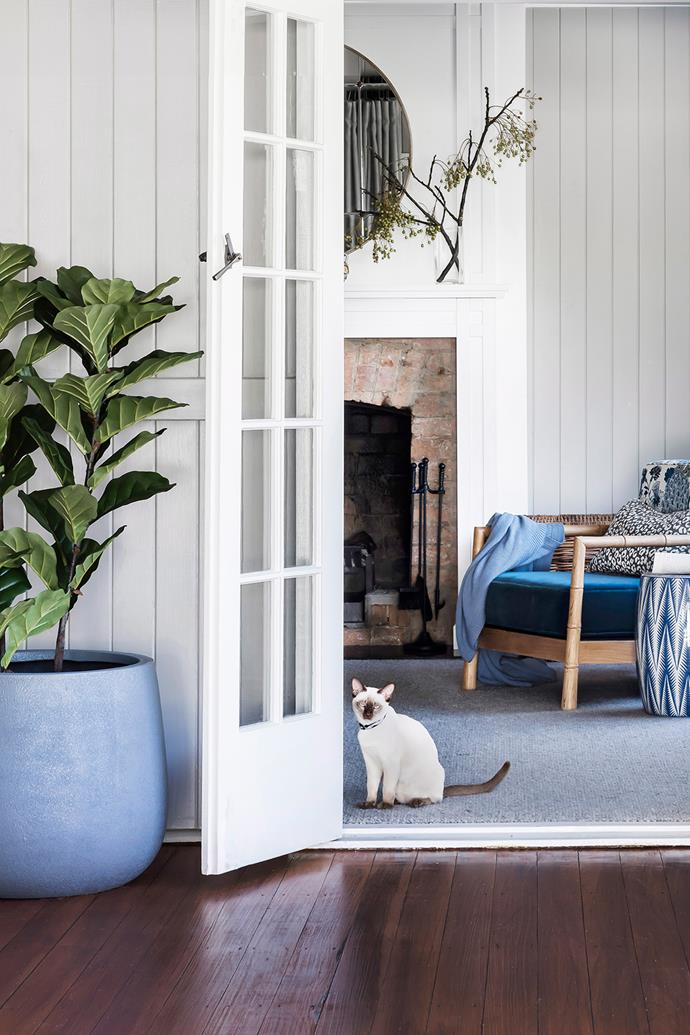 Cats should always be brought indoors at night. *Photo: Maree Homer / bauersyndication.com.au*