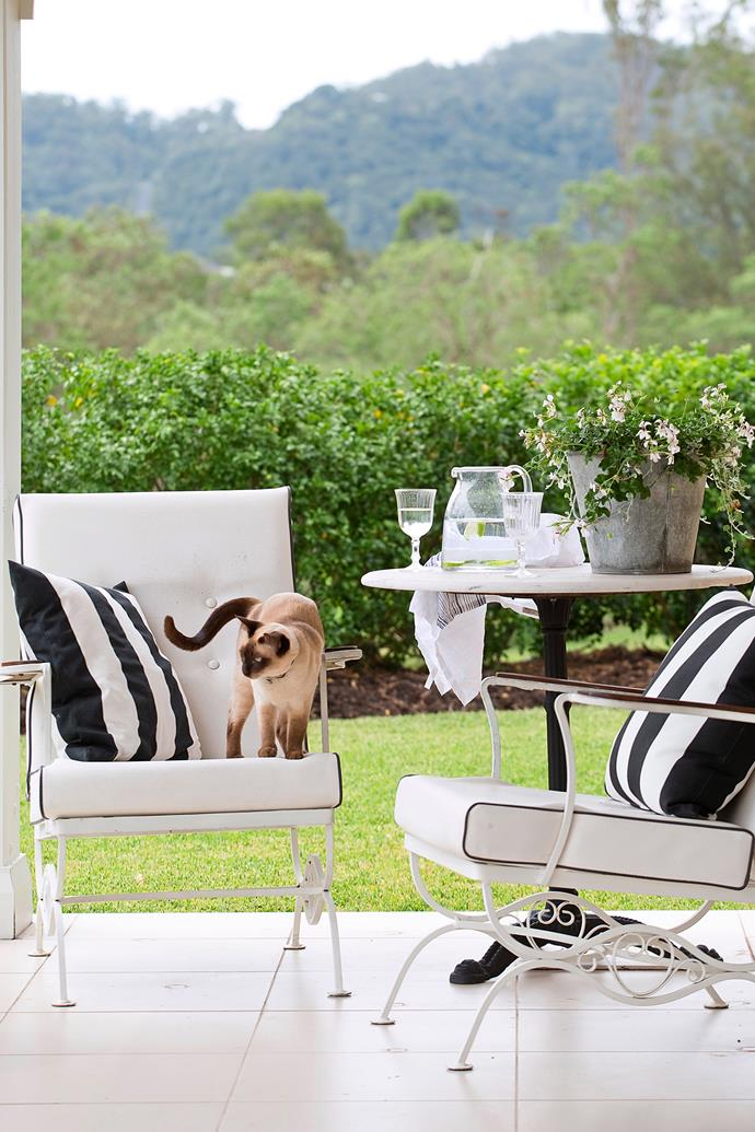 Cats often enjoy lounging around on outdoor furniture. *Photo: John Downs / bauersyndication.com.au*