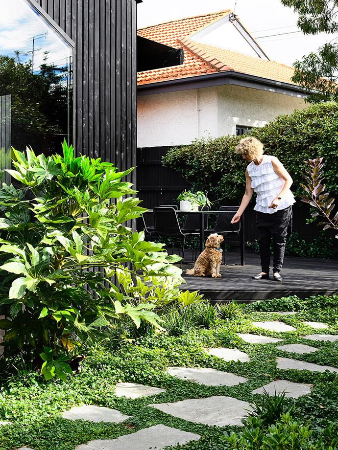 Stop your dog from digging up the garden by minimising the amount of visible soil. A hardy ground cover like lamb's ear could do the trick. *Photo: Derek Swalwell / bauersyndication.com.au*