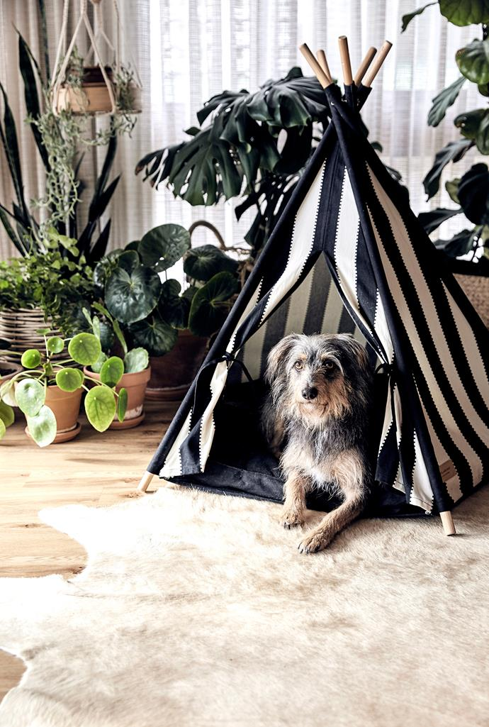 During summer, it's important that your dog has a lot of shady spots in the garden to retreat to. You can either plant some trees or pet friendly herbs, or put up a little dog tent like this. *Photo: Nic Gossage / bauersyndication.com.au*