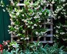 7 fast growing climbing plants