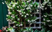 7 fast growing climbing plants