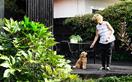 How to create a pet-friendly garden