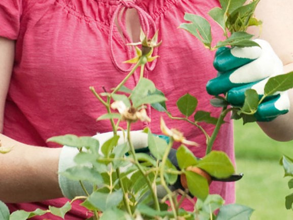 **Tidy up your plants:** Dash around with secateurs and snip off every dead leaf and flower you see, and anything that's been badly heat affected. If a plant is looking really shocking, pull it out. Cut back annuals or perennials that have finished flowering as they may come good and re-flower.