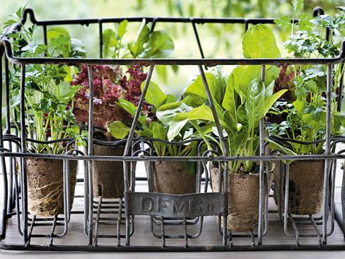 **Grow your own salads:** Keep planting seedlings of salad greens such as lettuce, rocket and spinach every couple of weeks so you always have fresh salad at hand no matter how many people drop in unexpectedly during the holidays.