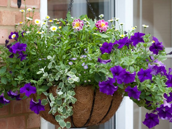 **Plant up pots:** To enliven dull spots, pot up flowering gardenias, hydrangeas, geraniums or agapanthus and place them strategically so they can be seen by guests. If you prefer native plants, Christmas bush, grevilleas and kangaroo paws are all looking amazing at the moment and do very well in sunny spots. You can buy ready-planted hanging baskets or pots that are overflowing with flowers. It's worth spending that little bit extra and buying a couple. Position them either side of your front or back door to really make a statement.