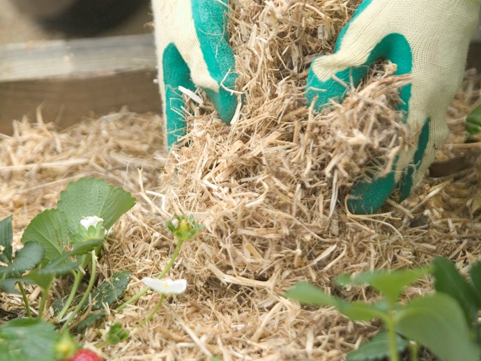 **Spread mulch everywhere:** Mulch covers up a multitude of sins (there's no need to weed!) and adds a finishing touch to garden beds. Sugar cane, lucerne, bark chip and tea tree mulch are all great choices. | Photo: Brent Wilson / bauersyndication.com.au