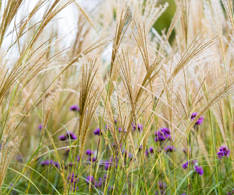 8 Ornamental Grasses That Will Bring Your Garden To Life