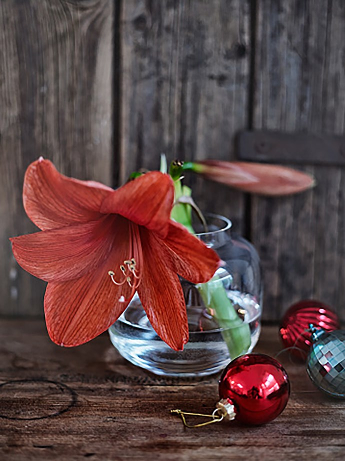 Whether you arrange them with other flowers or let them shine on their own, Christmas lilies make for a striking display. *Photo: Getty*
