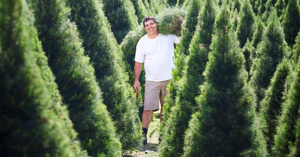The best Christmas tree farm near me (in every state) | Homes To Love
