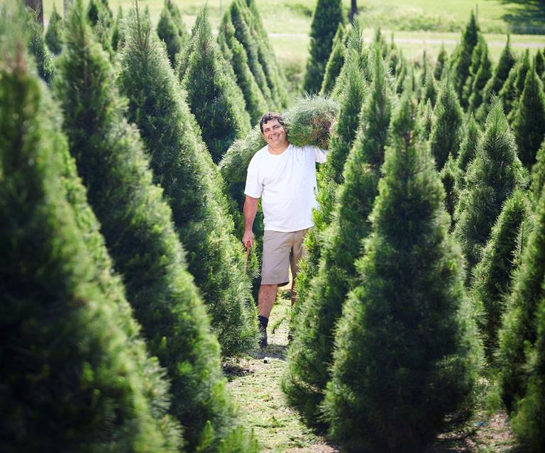 Christmas Trees Near Me.Best Christmas Tree Farms Near You In Every State Homes