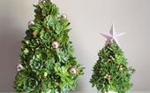 How to make a mini succulent Christmas tree