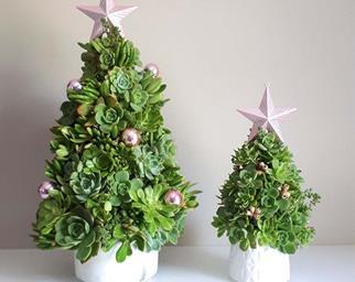 mini succulent Christmas trees