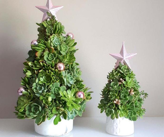 "**Christmas catci:** If you've been searching for the perfect Christmas tree for a tiny home or apartment, but still haven't found it, look no further than this ingenious mini Christmas tree you can make entirely from succulent[Find out how to make your own >](https://www.homestolove.com.au/how-to-make-a-mini-succulent-christmas-tree-10721|target=""_blank"")"