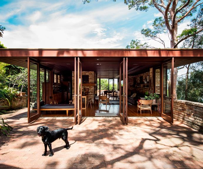 """Rescue cocker spaniel cross greyhound-whippet-cattle dog, Buddy, enjoys the easy [indoor-outdoor space](https://www.homestolove.com.au/12-indooroutdoor-ideas-for-a-stunning-entertaining-area-18680