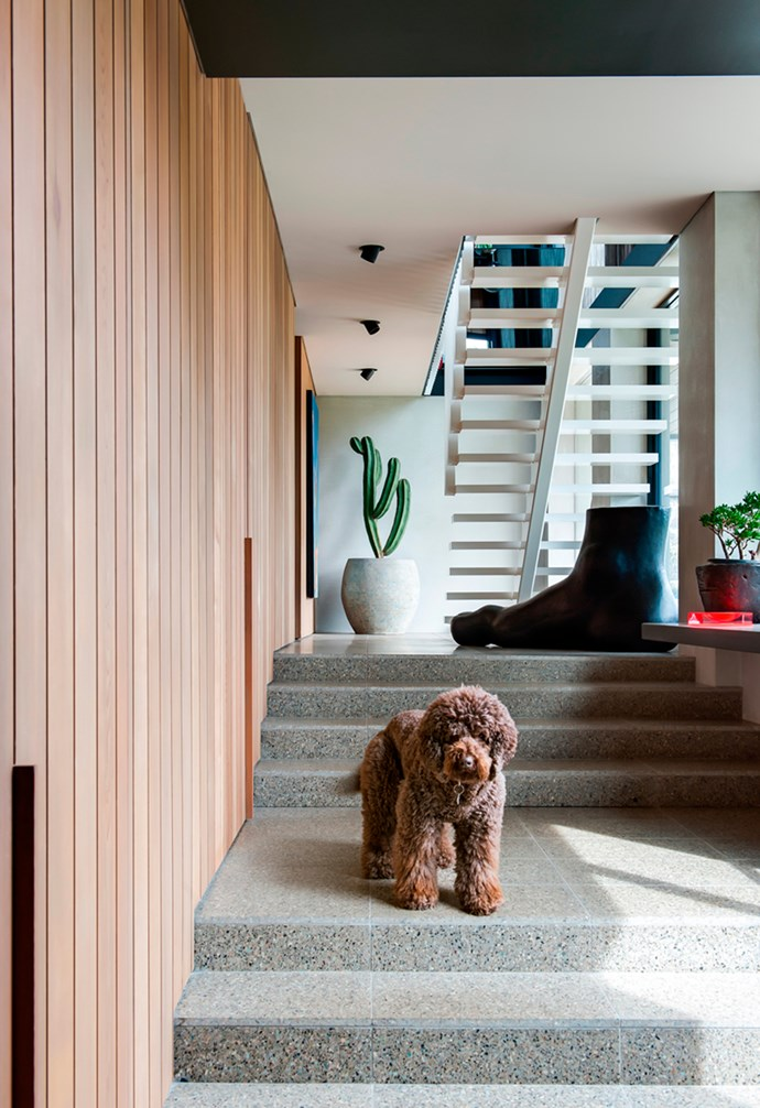 """Renowned bed hog, Charlie the chocolate Spoodle, fits perfectly into this 1960s inspired light-filled home in Blairgowrie. Designed by SJB Melbourne, this stunning home contrasts warm [cedar ceilings](https://www.homestolove.com.au/shannon-vos-different-ceiling-types-and-why-they-work-15321 target=""""_blank"""") and walls with cool concrete and [terrazzo floors](https://www.homestolove.com.au/terrazzo-trend-2018-marble-5947 target=""""_blank""""). *Architecture: [SJB Melbourne](https://www.sjb.com.au/ target=""""_blank"""" rel=""""nofollow"""")   Photography: Nicole England*."""