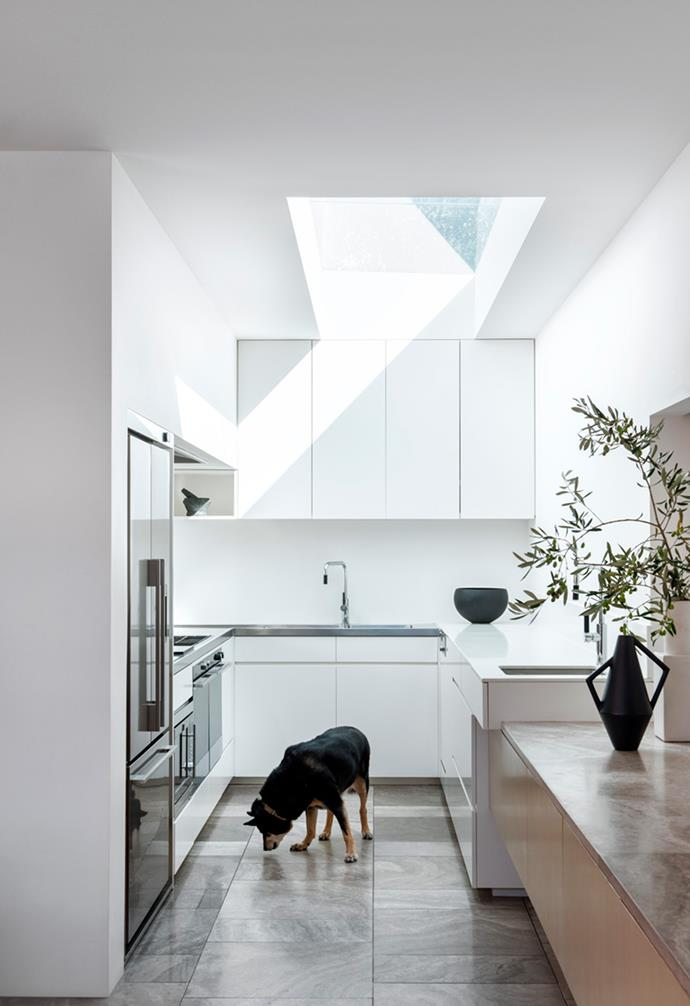 """Claire, a retired sheep dog, sniffs around the kitchen of her home in Balaclava, Melbourne. The original Victorian weatherboard has been lovingly restored, with a modern and spacious timber-clad extension added at the back. *Architecture: [Coy Yiontis](http://www.coyyiontis.com.au/