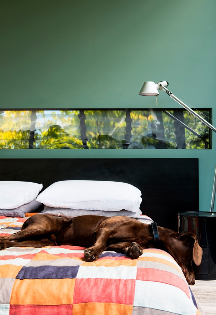 """Dougal lounges on his owner's bed in his light-filled home located in Sydney's Surry Hills. The relaxed, eight-year-old German shorthaired pointer enjoys playing ball and sitting on his humans. *Architecture: [Smart Design Studio](http://smartdesignstudio.com/ target=""""_blank"""")   Photography: Nicole England*."""