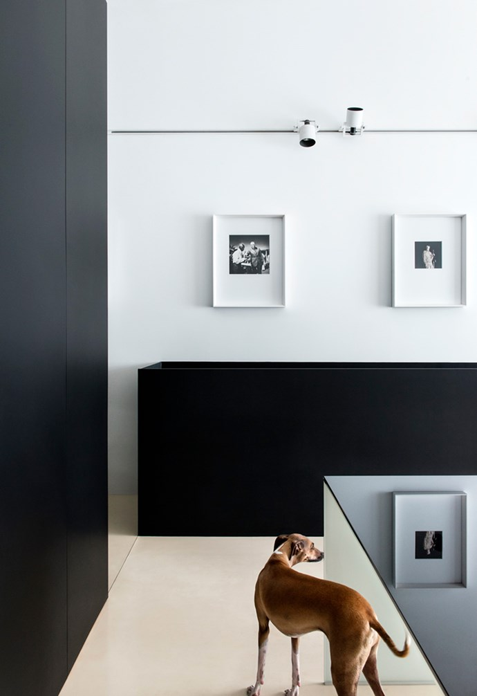 """A pair of Italian greyhound brothers Enzo and Carlo roam their elegantly [converted minimalist warehouse](https://www.homestolove.com.au/a-warehouse-style-home-is-revamped-into-an-entertainers-delight-18330 target=""""_blank"""") residence and here, one of them takes a quick break from exploring. The Surry Hills home was designed by Ian Moore with the dogs in mind in every aspect – they even have their own black leather beanbags! *Architecture: [Ian Moore](http://ianmoorearchitects.com/ target=""""_blank"""" rel=""""nofollow"""")   Photography: Nicole England*."""