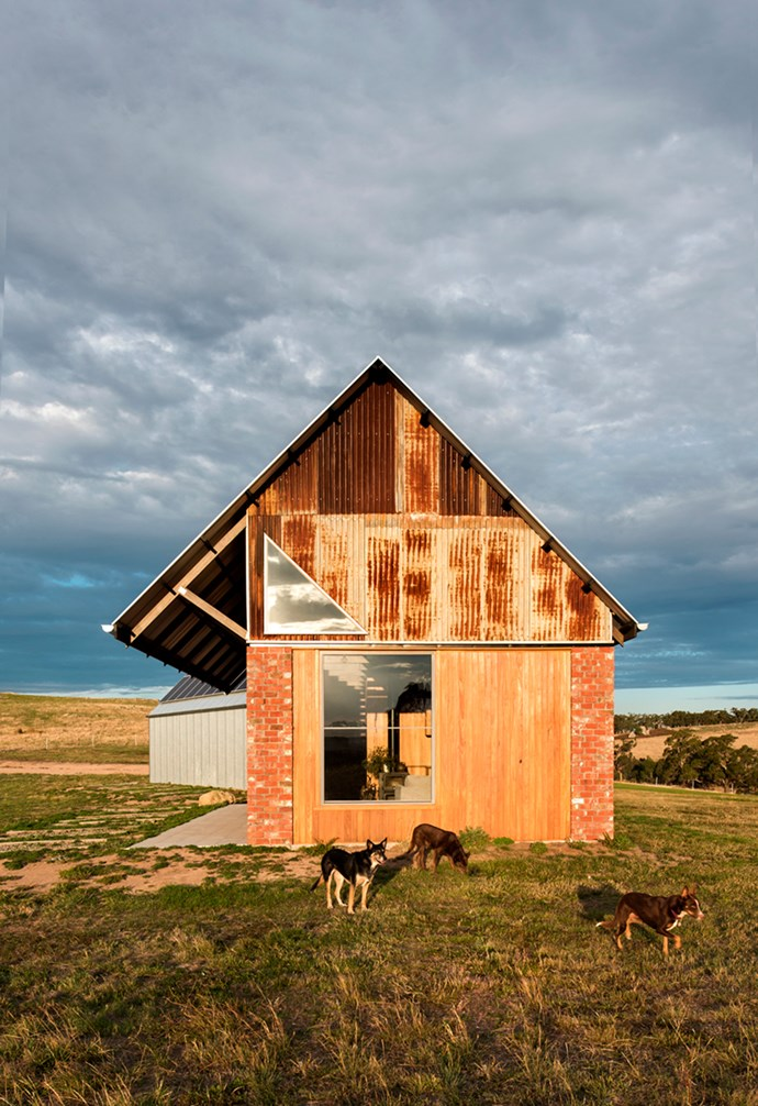 """Kelpies Scout and Diesel and their Collie-Jack Russell brother Boston roam the property on their idyllic Nulla Vale rural property. The [sustainably-built](https://www.homestolove.com.au/preview/how-to-design-an-eco-friendly-sustainable-home-19038 target=""""_blank"""") cosy country home designed by MRTN features high ceilings and big windows. *Architecture: [MRTN](http://mrtn.com.au/ target=""""_blank"""" rel=""""nofollow"""")   Photography: Nicole England.*"""