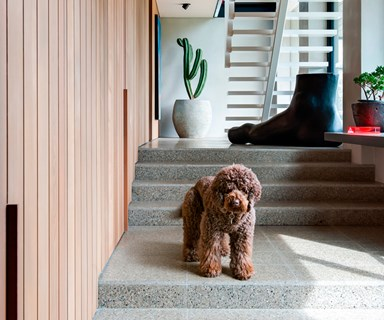 Resident dog: these furry friends live in incredible homes