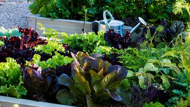 What to plant in the garden this summer