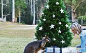 A bush Christmas in the NSW Hunter Valley