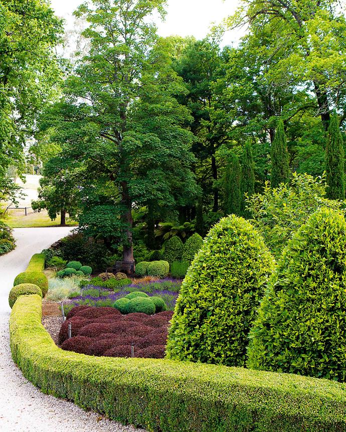 A curve of clipped hedge borders the driveway. The solidity of the box topiary gives interest during the winter when the many deciduous trees become leafless. | *Photography: Simon Griffiths*
