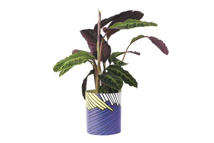 "Papier Tigre paper pot plant cover, $24.95/large, [Milligram](https://milligram.com/|target=""_blank""|rel=""nofollow"")."