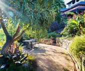 A wild urban garden featuring a mix of native and exotic plants