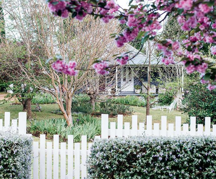 Cottage exterior visible behind pink flowers and white picket fence