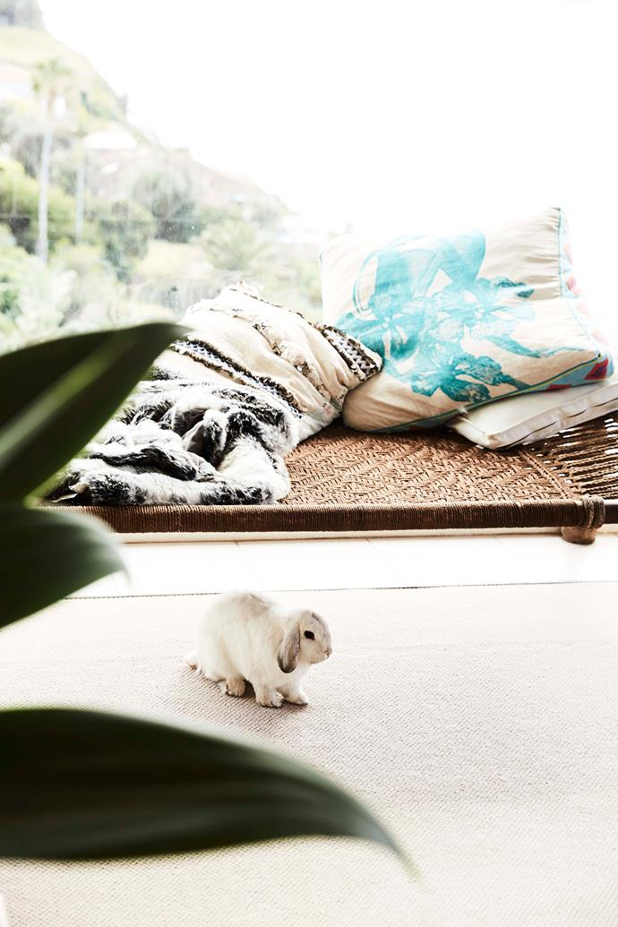 Mini Lops like Hazel grow up to become full-sized rabbits.