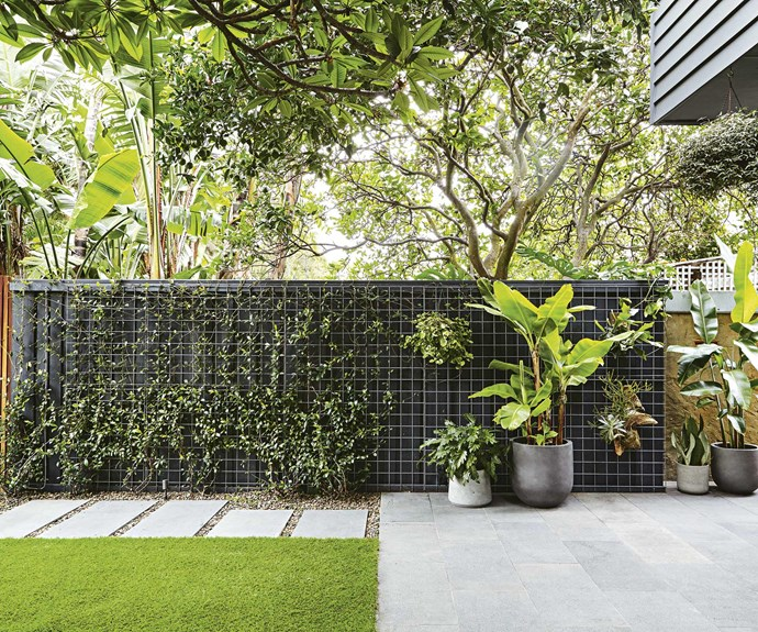 """A variety of [potted greenery](https://www.homestolove.com.au/top-performing-potted-plants-for-your-garden-2183
