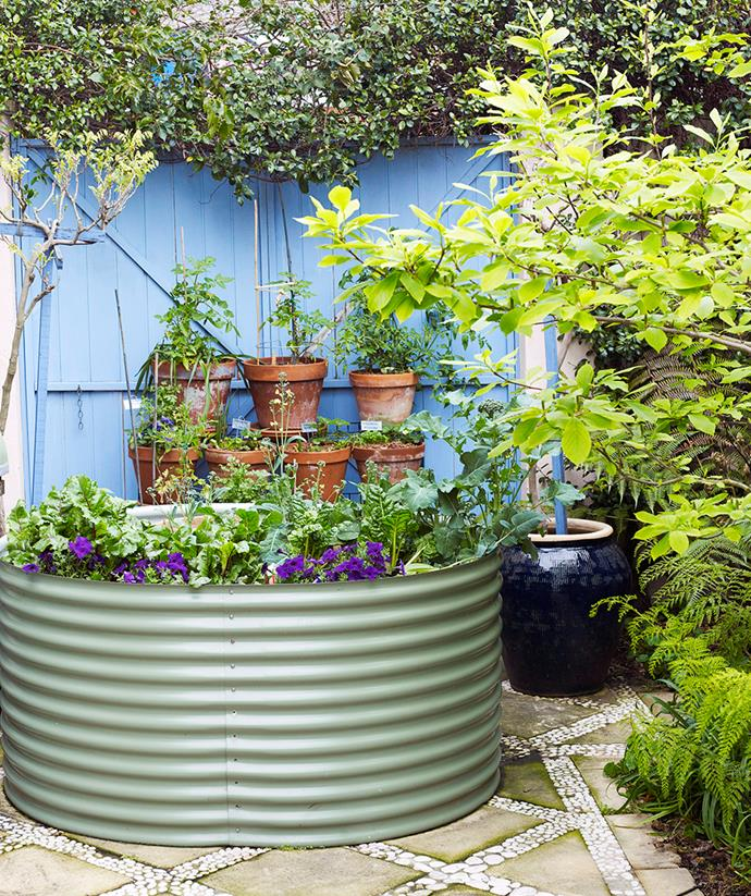 Filled with herbs and veggies, this edible garden promotes sustainability whilst serving as a calming green retreat.  *Image: Prue Ruscoe / bauersyndication.com.au*